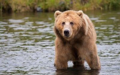 Akár kibújt a medve a barlangjából, akár nem, ideje felkészülni a tavaszi fáradtság elkerülésére